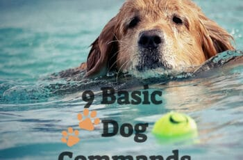 9 Basic Dog Commands